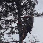 MJ Enright & Sons Tree Service, Ontario, Ottawa